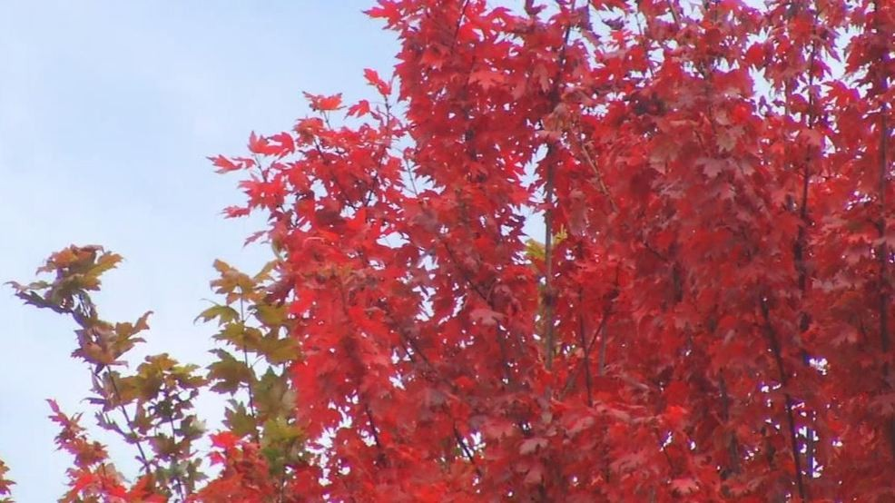 September weather will determine brilliance of fall leaves | WCYB